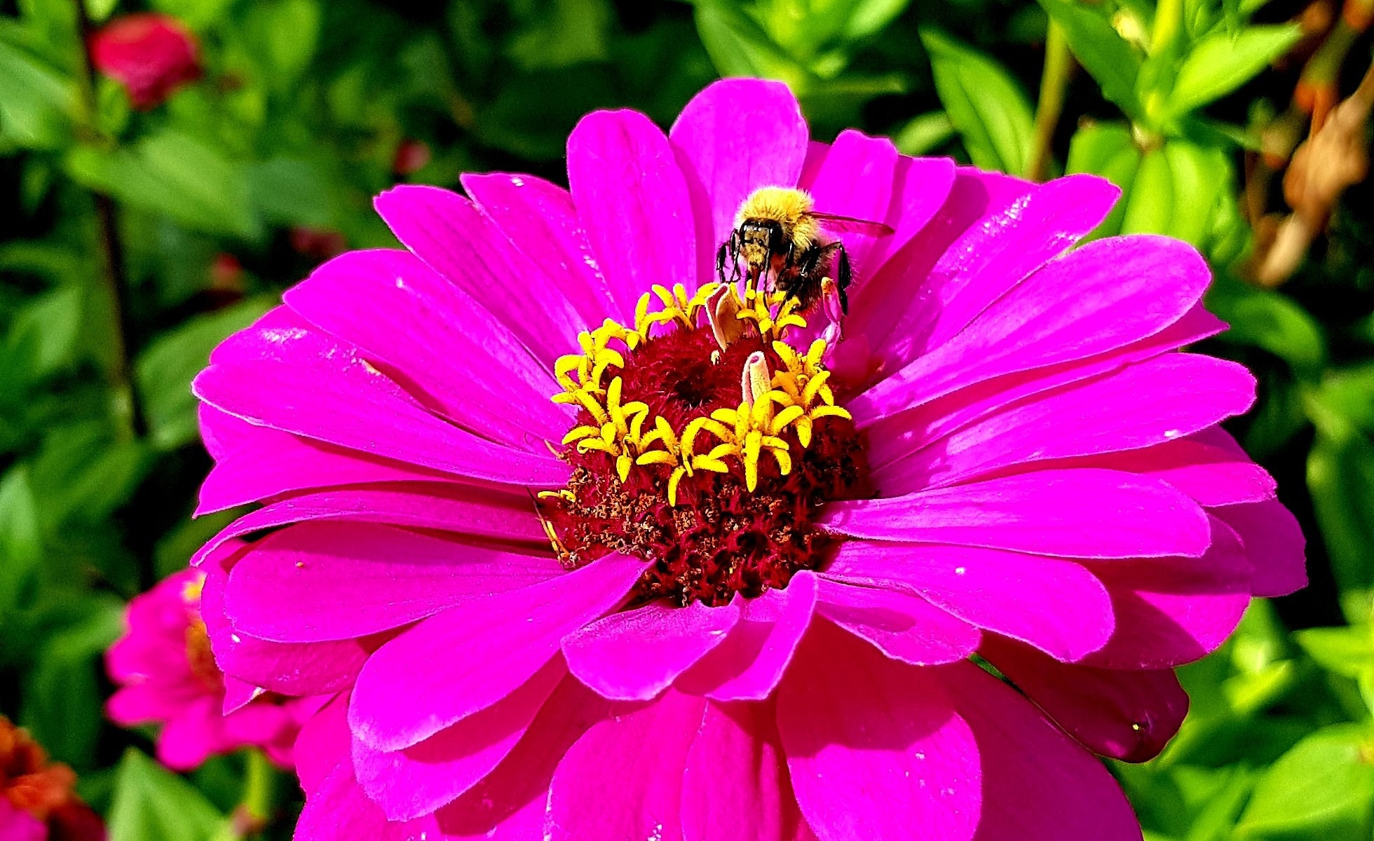 Symbiotic relationship: Bee and the Flower