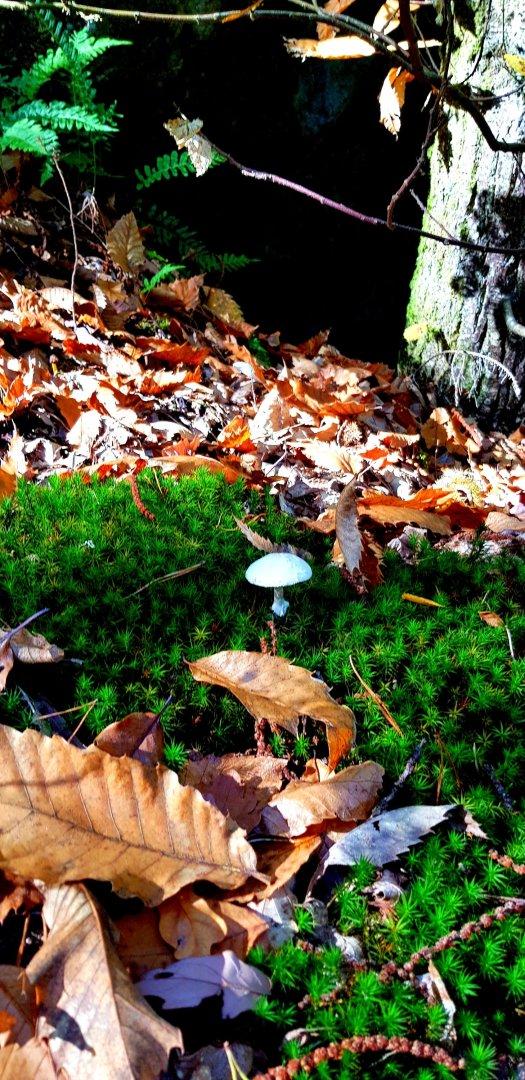 Mushroom Champignon Fontainebleau