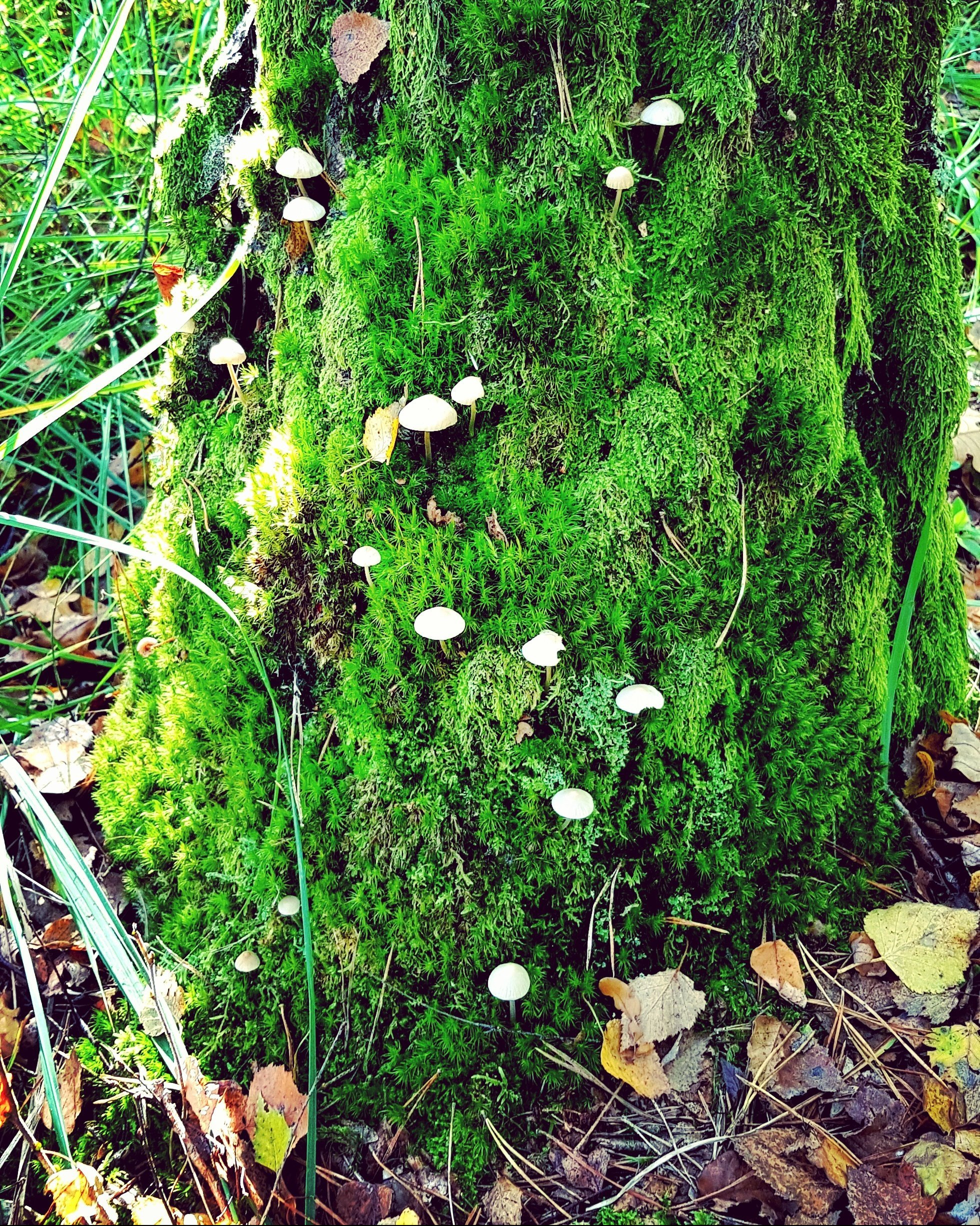 mushroom trail at #Fontainebleau #hike