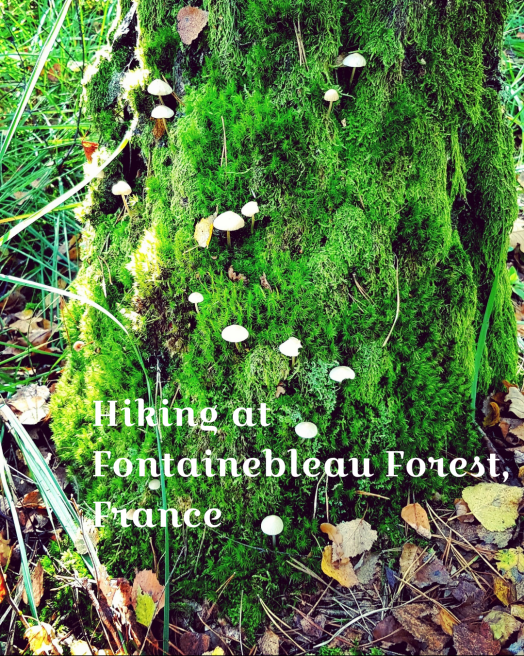 Hiking at Fontainebleau Forest Paris France